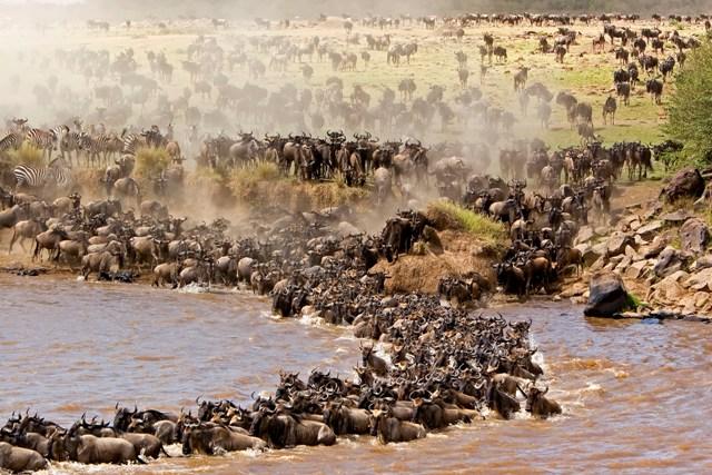 Maasai Mara Destination Tour.