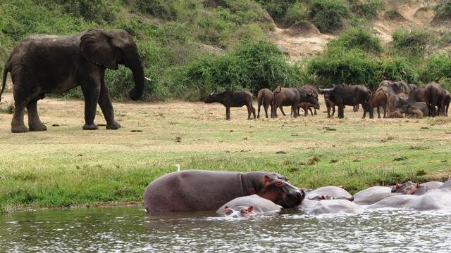 Queen-Elizabeth-National-Park-elephant