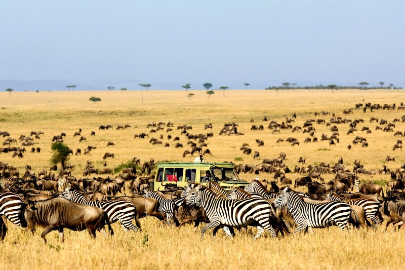 migration-Serengeti-Elite Travel