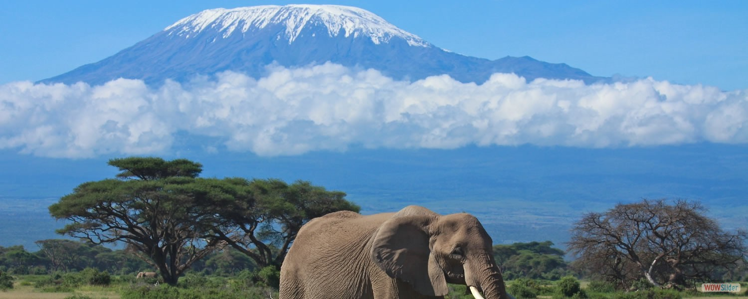 Great View of Mt.Kilimanjaro is a dormant volcanic mountain in Tanzania